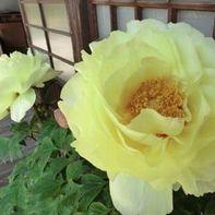 牡丹と蓮の花